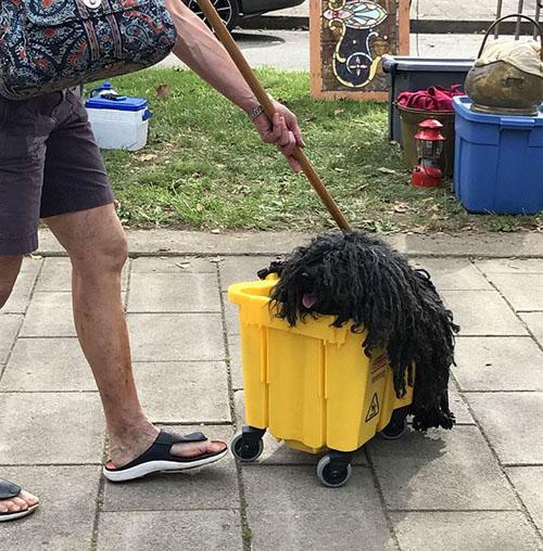 маскарадный костюм для собаки