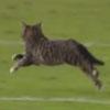 котёнок пробежался по стадиону