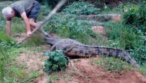 крокодил укусил мужчину за ногу