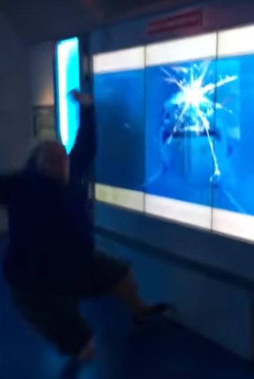 акула напугала посетителя музея