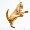 кошки владеют боевыми искусствами