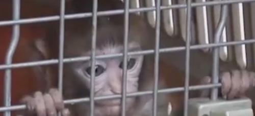 обезьянка проникла в жилой дом