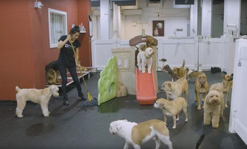 роскошный отель для собак