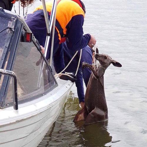 кенгуру чуть не утонул