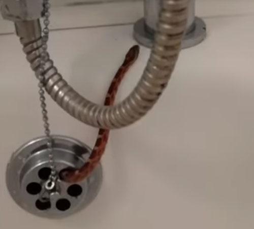 мужчина нашёл змею в ванной