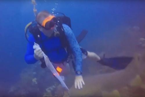 акула попыталась отнять рыбу