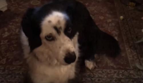 собака разодрала диван