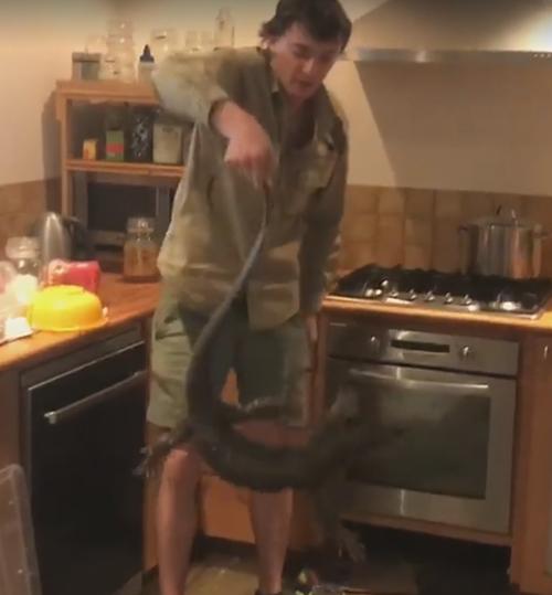 ящерица спряталась под плитой