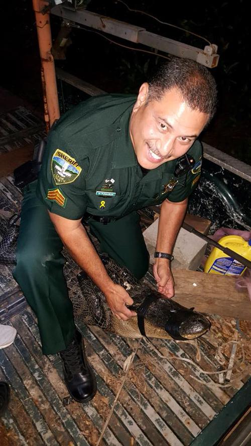 аллигатор во дворе жилого дома