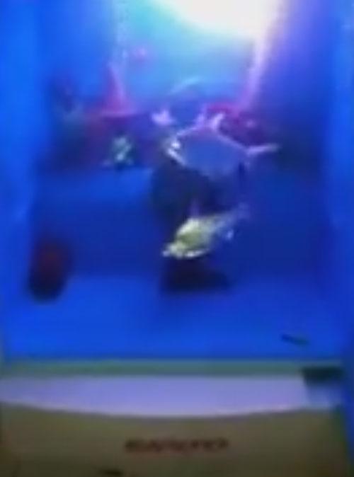 аквариум внутри холодильника