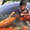 дети купаются с карпами