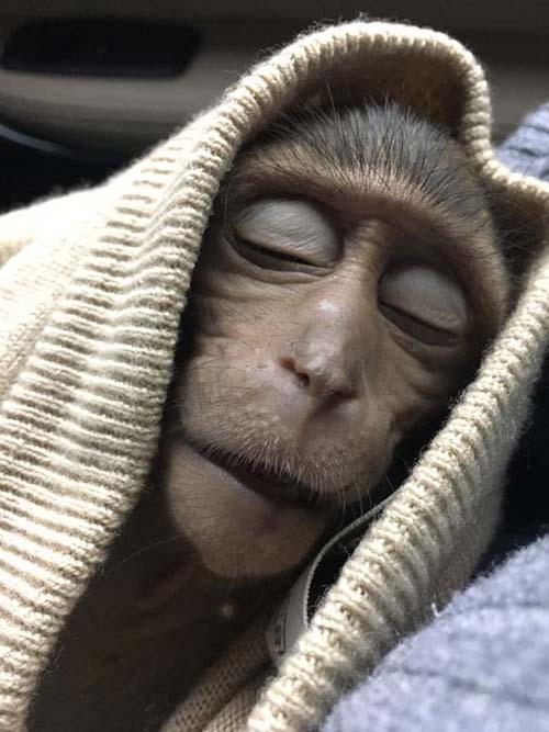 обезьяна украла кофе у туриста