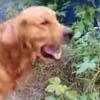 собака жадно ест растения