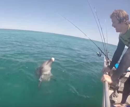 дайвер перепутал дельфина с акулой