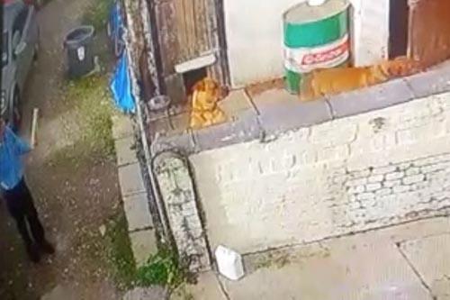 почтальон отдал посылку собакам