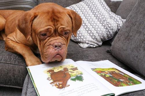 собака с бивнями ищет новый дом