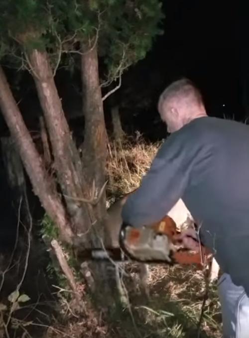 мужчина с бензопилой спас оленя