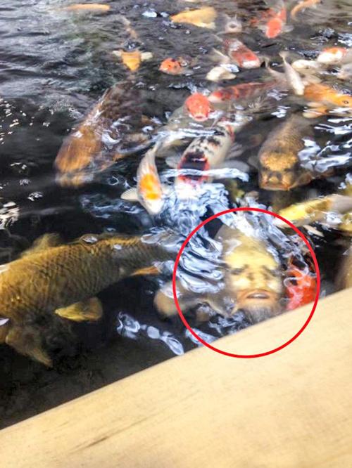 рыба с портретом на спине