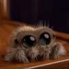 очаровательный анимационный паук