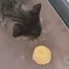 гусь отнял бисквит у кошки