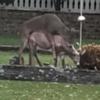 олень спаривается со скульптурами