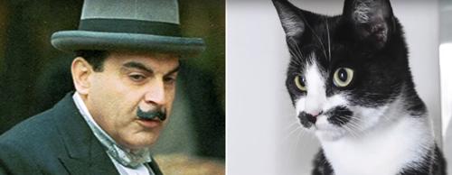 кошка похожа на эркюля пуаро