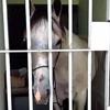 лошадь посадили в тюрьму