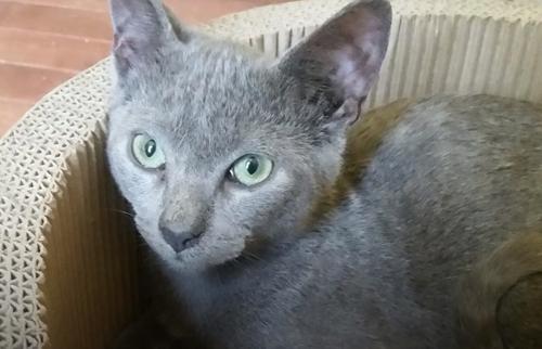 кошки из заброшенного дома