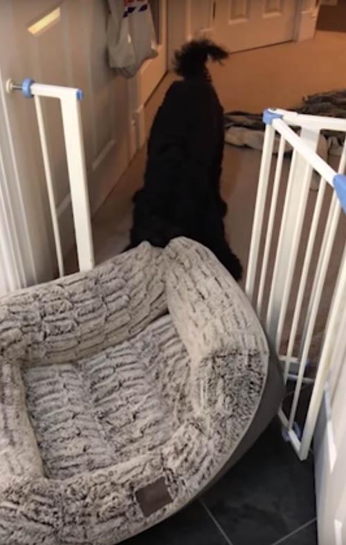пёс перетащил свою лежанку