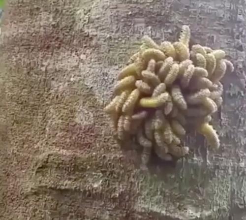 существо с щупальцами на дереве