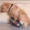 слишком маленькая лежанка для пса