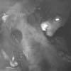 медведи подрались перед камерой