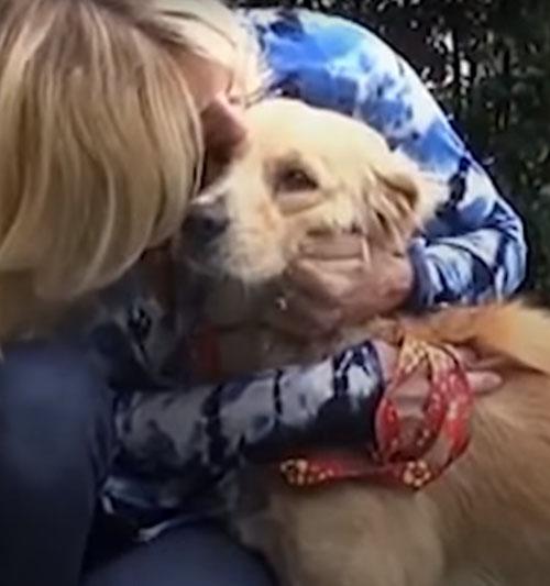 собака научилась доверять людям
