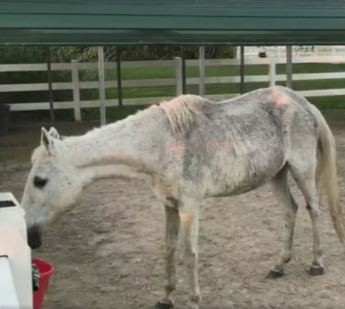 старая лошадь во рву с водой