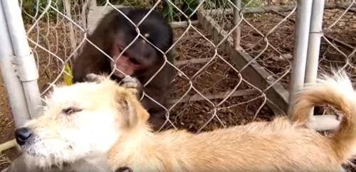 обезьяна привела в порядок собаку