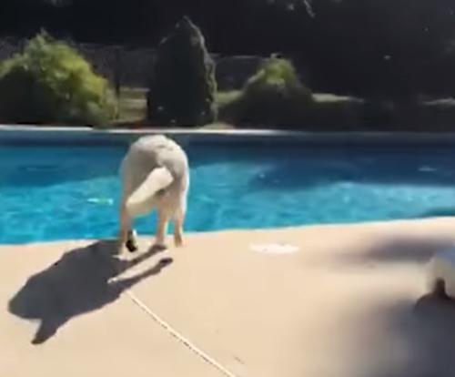 собака сбежала от хозяйки