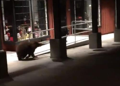 медведи испугались полицейского