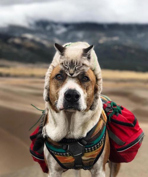 кот и пёс любят путешествовать