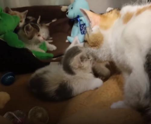 кошка воссоединилась с котятами