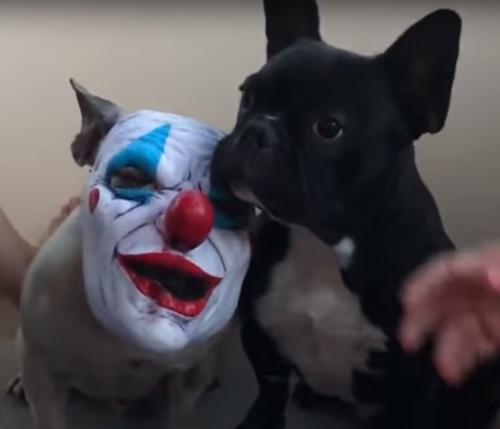 псы в страшных клоунских масках
