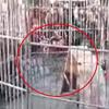 тигр укусил посетителей цирка