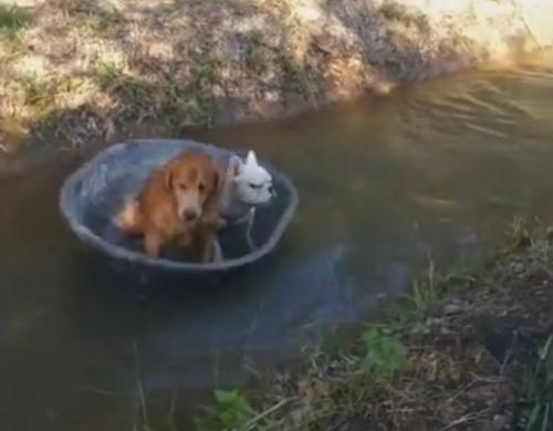 псы пустились в плавание в тазу