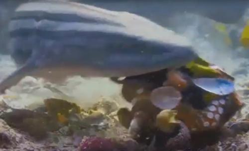 броня из ракушек для осьминога