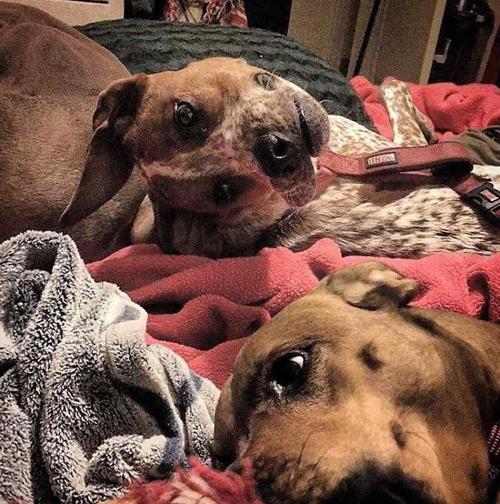 фото со странной собакой