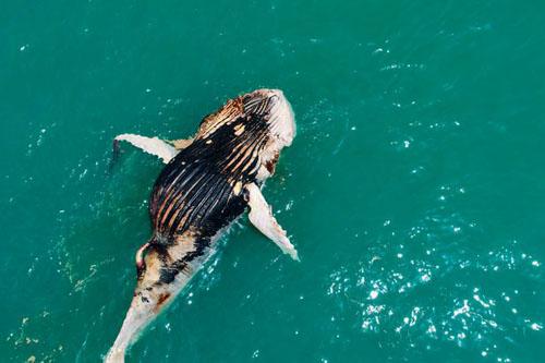 неаппетитный обед акул и крокодила