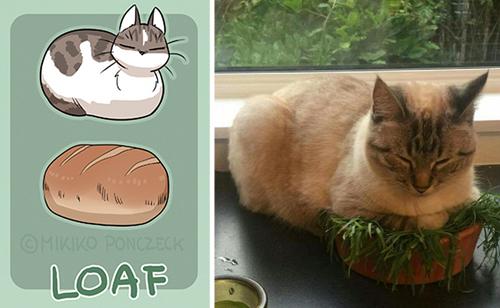 кошки очень похожи на хлеб