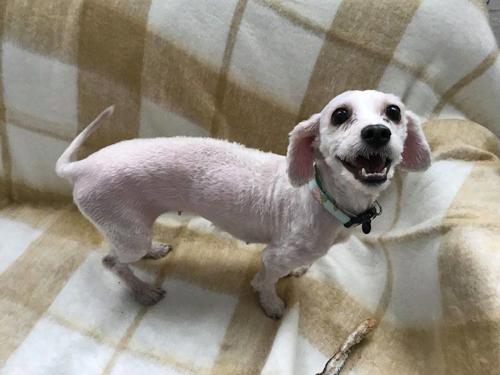 собака со свалявшейся шерстью