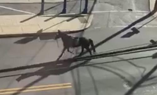 лошадь отправилась на прогулку