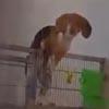 собачьи таланты скалолазания