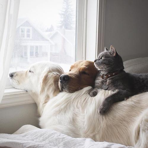 три очаровательных лучших друга